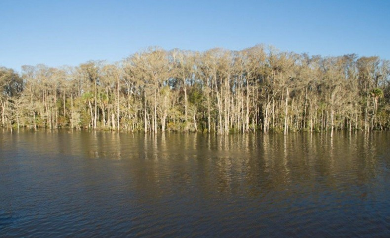 Lake Wimico Recreation and Conservation