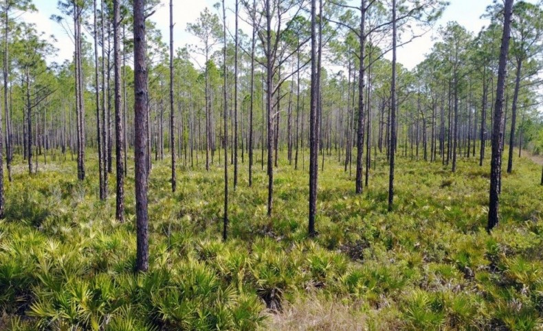 Green Swamp East