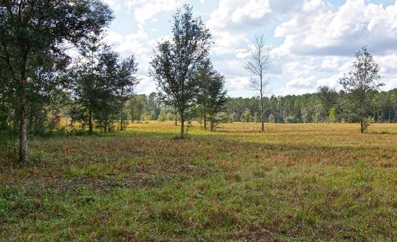 Williston Ranch 146 Acres