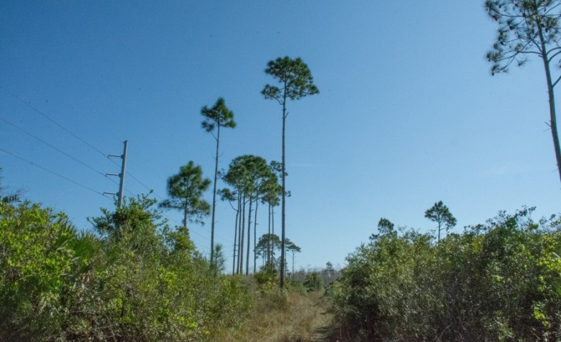 Honey Hole Ranch in Mims, Florida