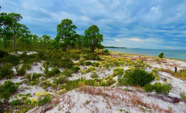 Dog Island Acreage in Carrabelle, Florida