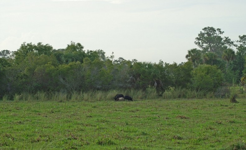 Lazy W Ranch in Felda, Florida