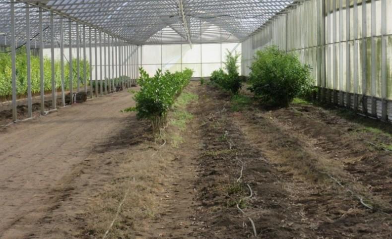 Dade City Citrus Grove & Nursery
