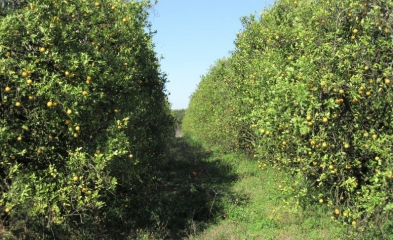 Dade City Citrus Grove & Nursery