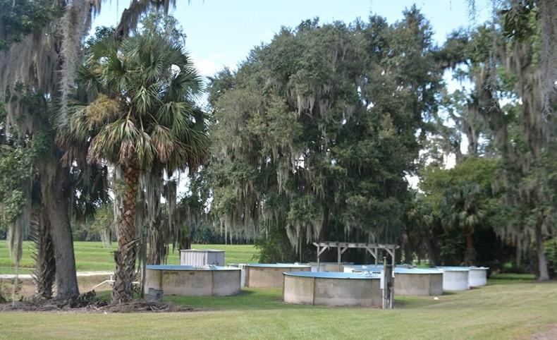 Central Florida Grass Carp and Game Fish Farm