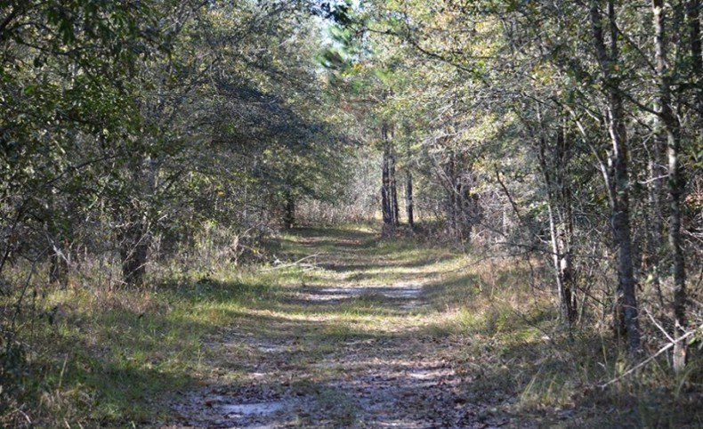Withlacoochee Recreational Investment