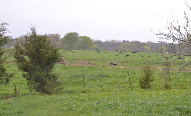 Large Mississippi Ranch