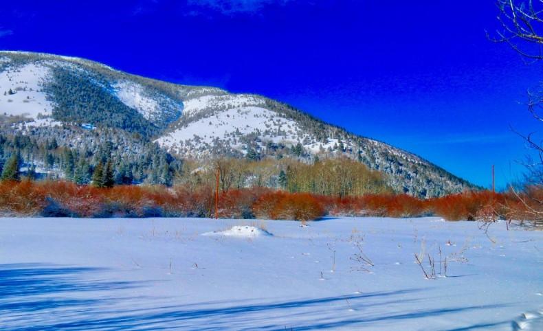 Lush Pasture & 2 Creeks