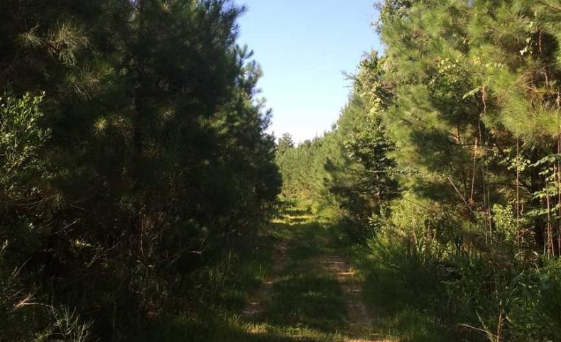 Land (275 Acres) For Sale in Grenada County, Mississippi