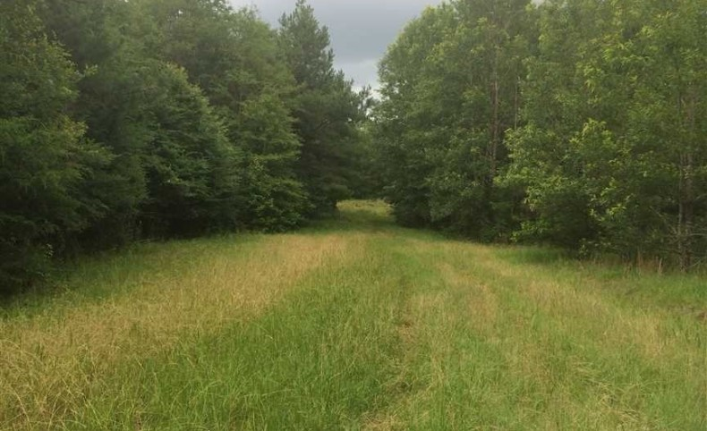 Hunting Land (425 Acres) For Sale in Holmes County, Mississippi