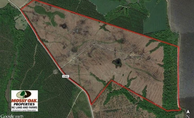 300 ac Riverfront Development Land for Sale in Bertie County, NC!