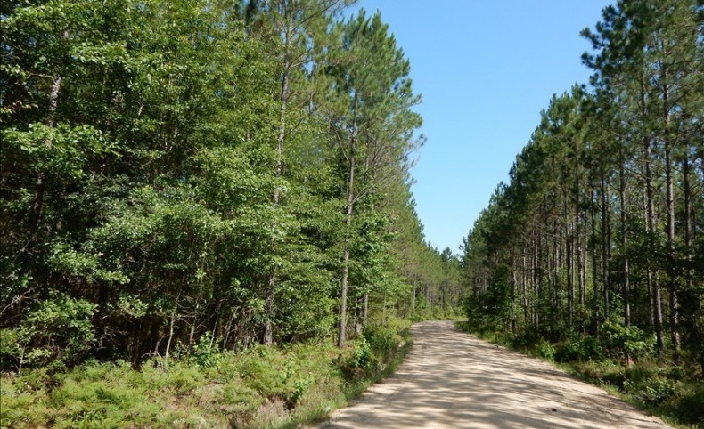593+/- Acres Timberland for Sale in Tattnall County, GA