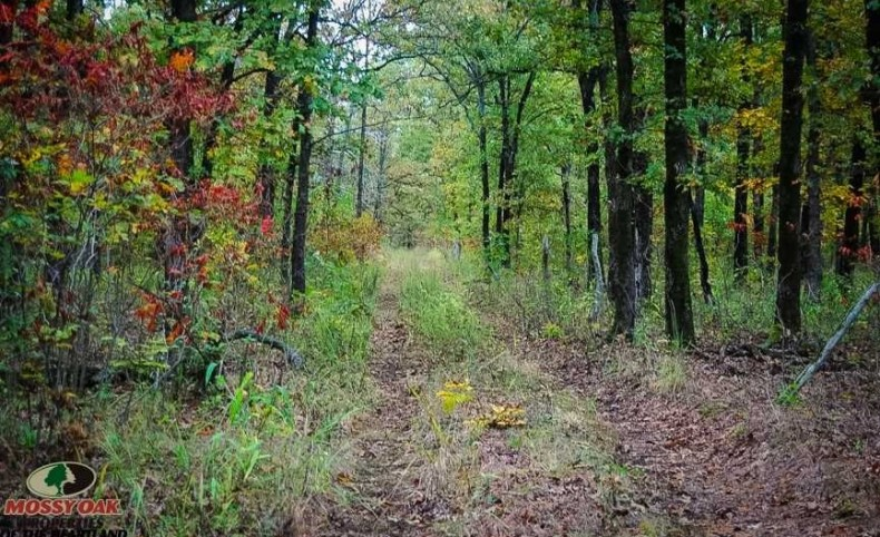 330 Acres of Recreational Ground on Spring River For Sale In Cherokee County, KS