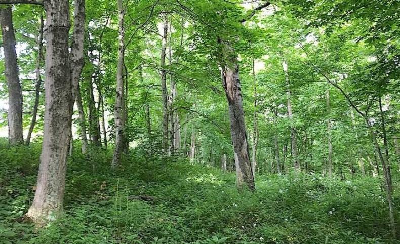 Nicewanger Rd - 126 acres - Washington County