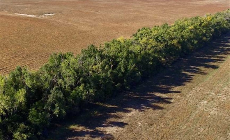 783+/- Acres of Farm Land and Hunting Property in Stafford County, Kansas