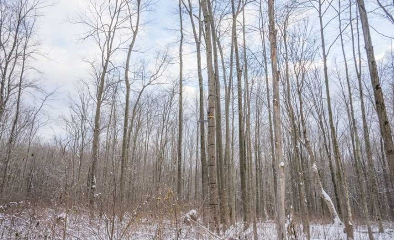 Kile Rd - 48 acres - Geauga County