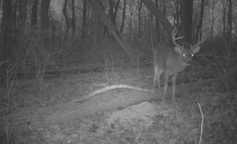 Goose Creek Rd - 500 acres - Vinton County
