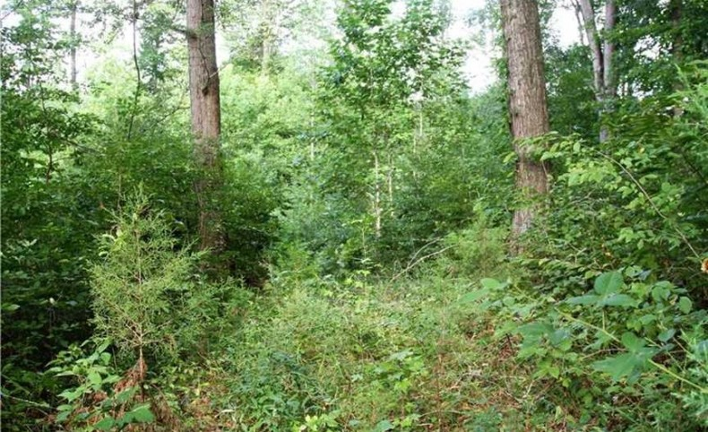REDUCED! 97 Acres Hunting Land with with Custom Home For Sale in Louisa County VA!