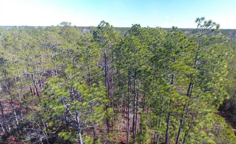 290.75 Acres of Creek Front Hunting and Timber Land For Sale in Pender County NC!