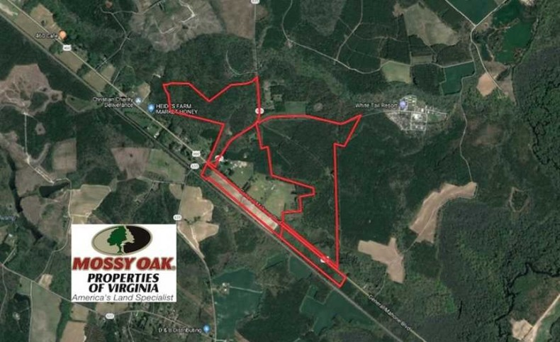 REDUCED! 272 Acres of Hunting and Investment Land For Sale in Southampton County VA!