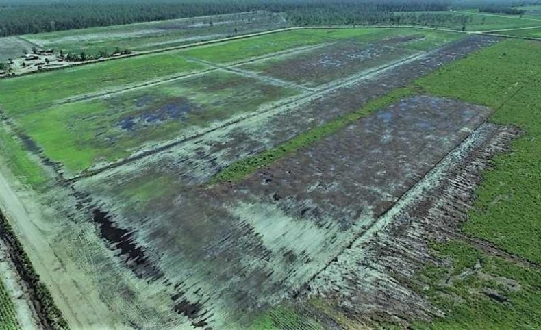 REDUCED! 4000 Acres of Timber Land and Cleared Land For Sale in Pamlico County NC!