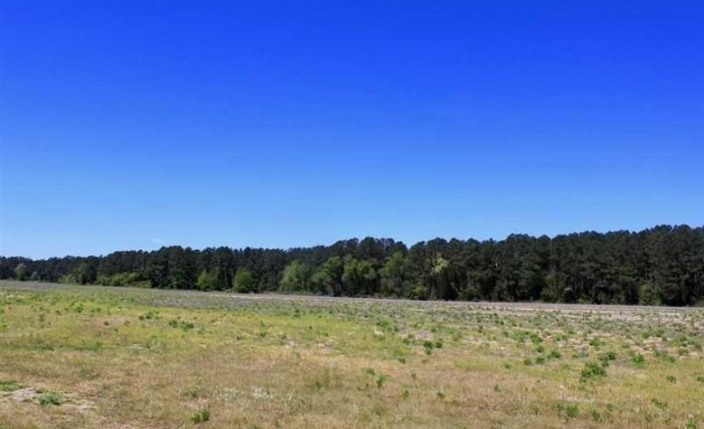+/-1384 Acres in Spring Lake, Harnett County