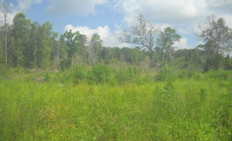 395 ac - W Factory St - Tangipahoa Parish Louisiana Mitigation Land for Sale