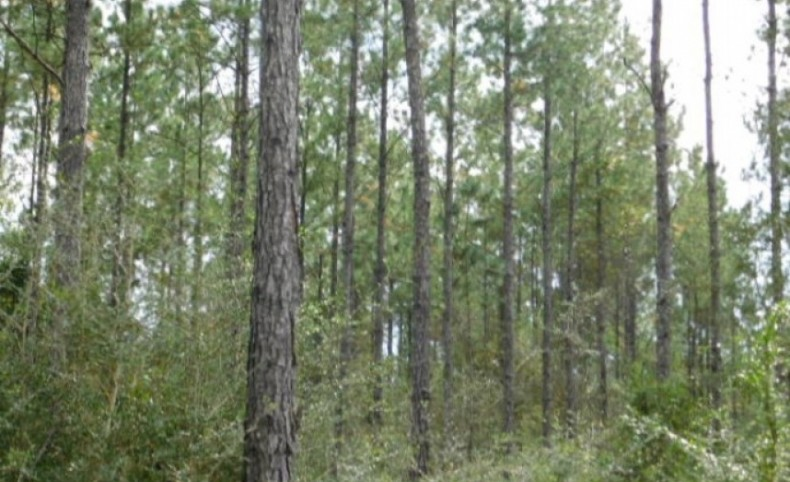 2,644 Acres in Stone County, MS; Outstanding Timber Investment