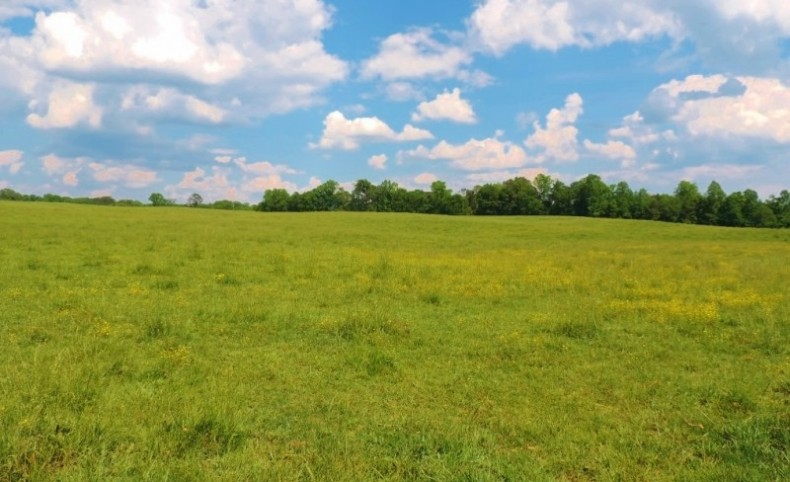 Pasture, 3 Homes, & 5 Ponds