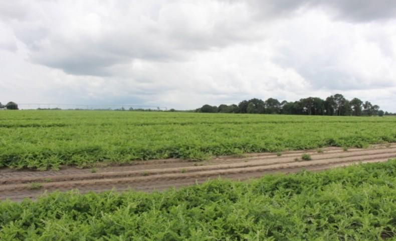 Prime Farmland - Rare Opportunity