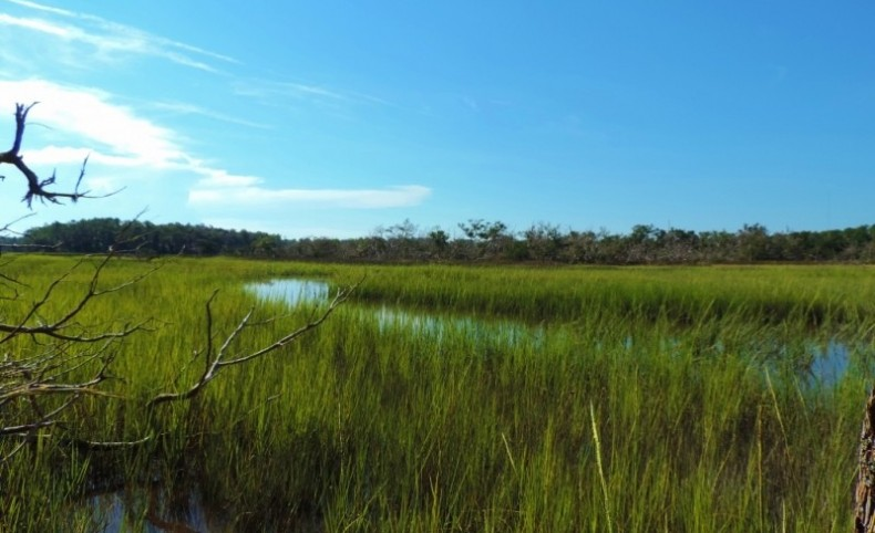 8,200 Ft. of Marsh Frontage