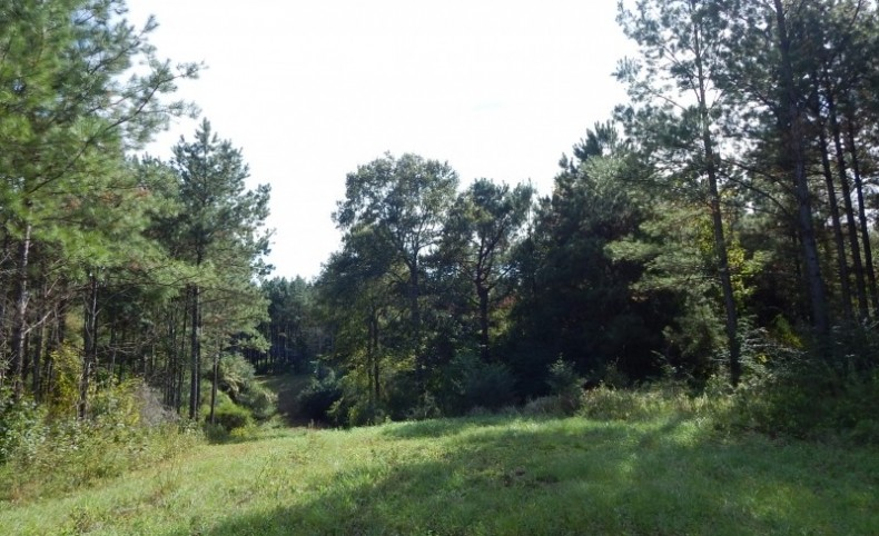 306 acre- Timber Inv. & Hunting