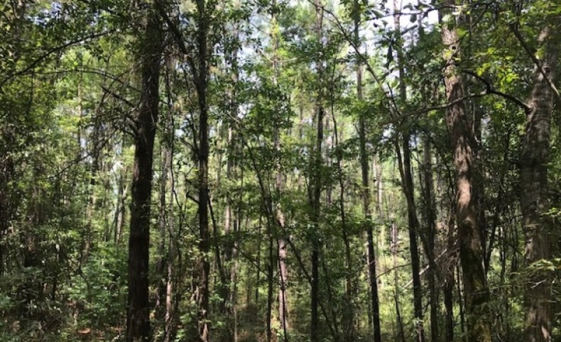 248 acre Hunting and Timberland Property in Pike County, MS