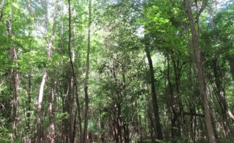 Cabin-Creek-Pond-Hardwoods