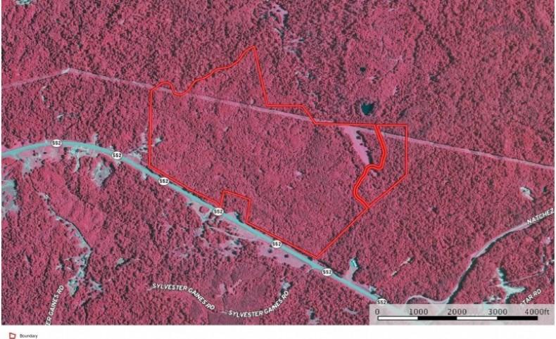 Big Buck Paradise 347 Acres Jefferson County, MS