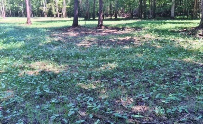 156 Acre Hunting Tract Hardwoods Creek Wilkinson County MS
