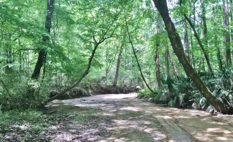 Hardwood Hunting Land Tract with Camp Wilkinson Co, MS