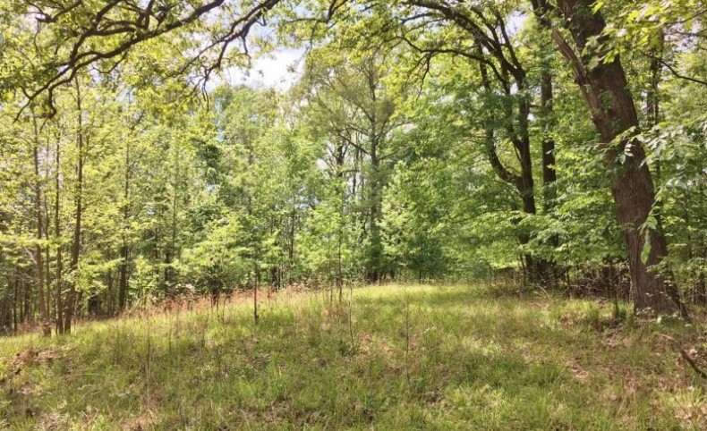 Hunting Paradise Land for Sale Yazoo County MS
