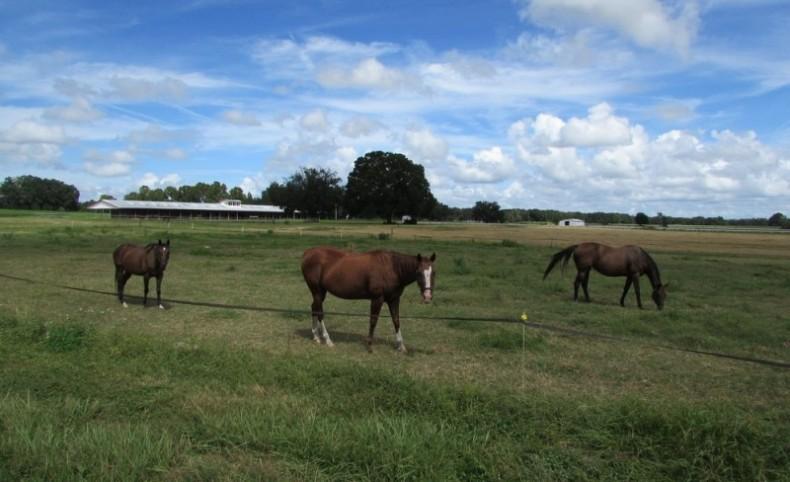 432 Acre Ranch - Citra, Florida