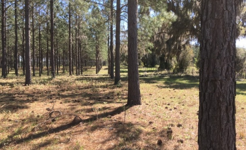 230 AC IN MADISON, FL