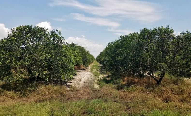 380 Acre Citrus Grove - Mineral Branch Road
