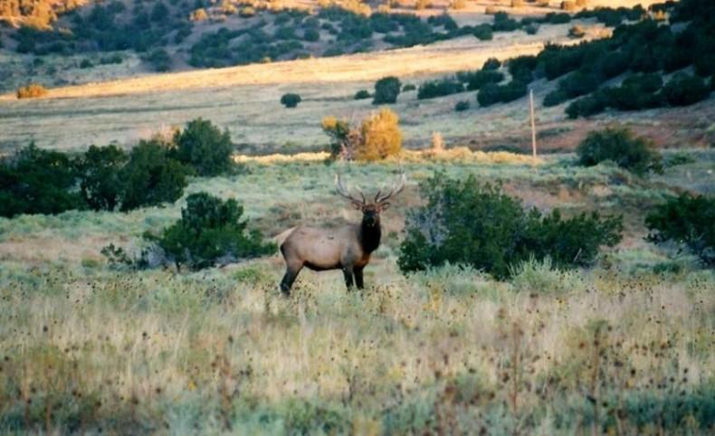 Crawford L Bar Ranch