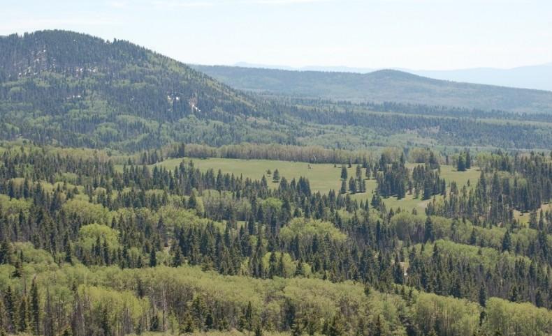 Hutch Septima Ranch