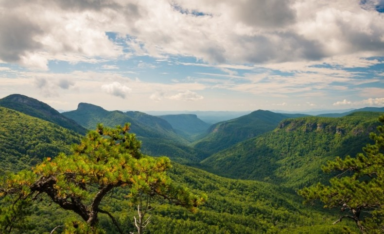 200+ ACRE Mountain- Development Bordering National Forest - Bank Asset Now Available For Purchase