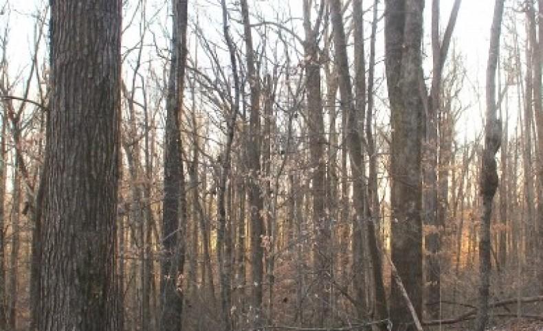 109 Acres crop land & mature timber