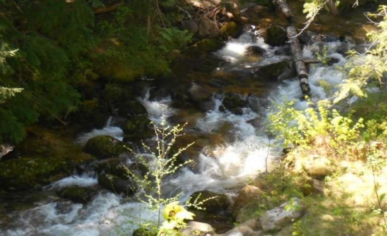 Fishing on Caribou Creek