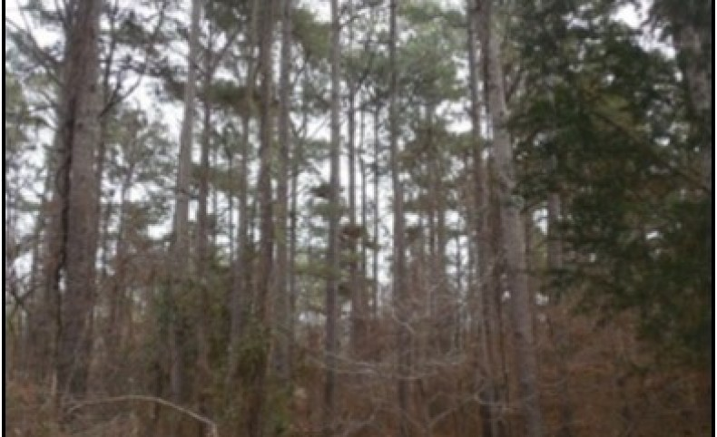 280.02 Acres in Lafayette County in Oxford, MS