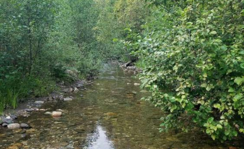 Surrounded by State/Forestry Land 74.14 Acres