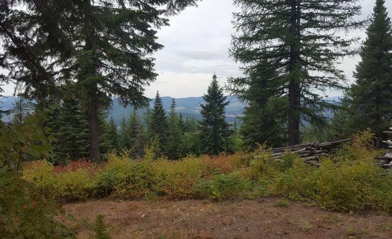 Idaho Deer Camp