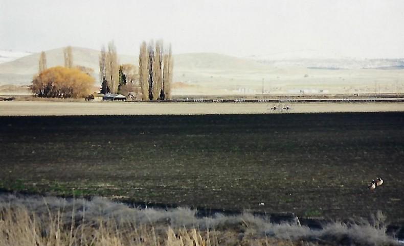 Wtaerfowl Hunters Dream on 7 Acres